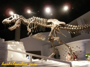 Earth Gallery - DinoSaur
