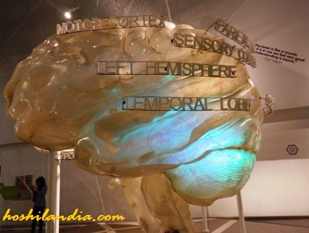 Mind Museum's Life Gallery - The Brain